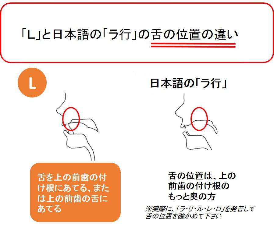 Lを発音する時の舌の位置