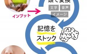 英単語を記憶して脳内に保管する流れ