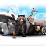 「動物」の英語|こんなにもある!種類や鳴き声や慣用句一覧
