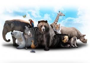 あなたはどれだけ知っていましたか?動物を使った慣用句!
