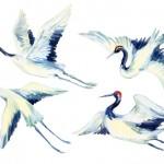 「鶴」を英語で表現|発音や折り紙などの関連英語もマスター
