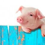 「豚」の英語|豚肉や食用では違う英語?面白い9個の表現