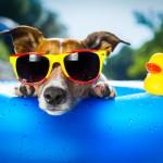 「夏」の英語|発音と英会話に役立つ!13個の関連表現