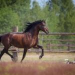 「馬」の英語|発音と12個のイディオムやことわざ集