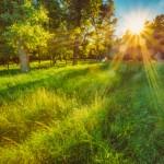 「自然」の英語|使える!5つのフレーズやその他の関連表現